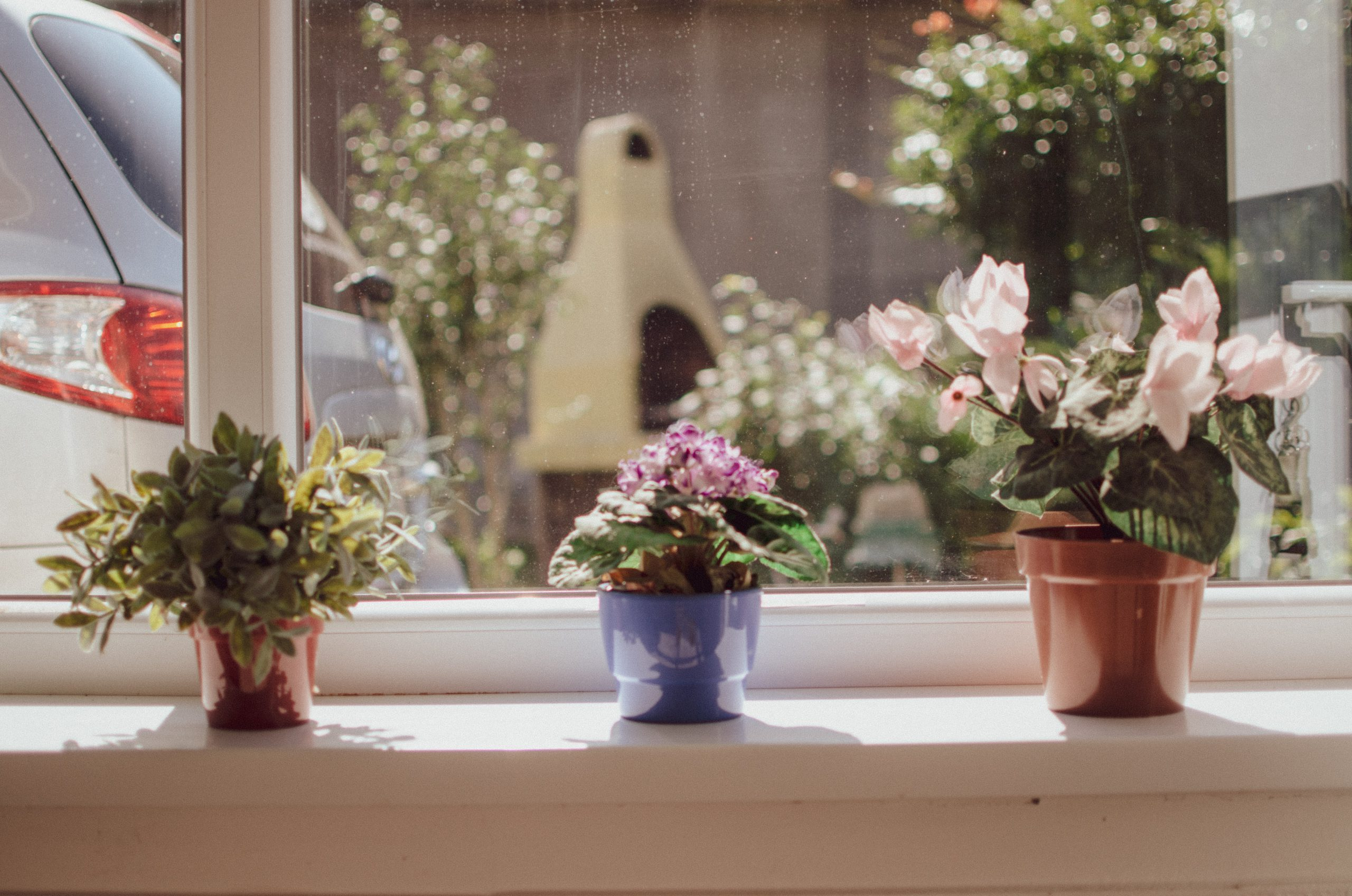succulents and house plants in window sill