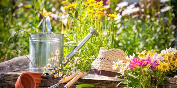 summer garden preparing