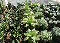 different species of haworthia succulent houseplant